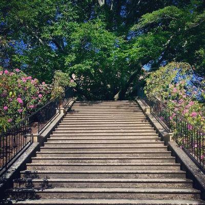 Tmarvlous Stairwelltoatree Tree Stairs stairway oldwestburygardens