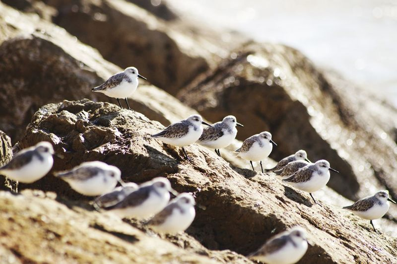 Close-up of birds on rock
