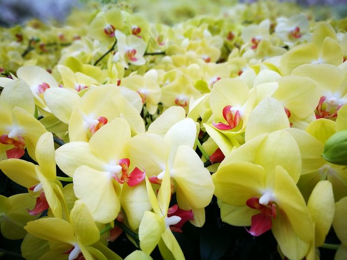 Flower Nature Green Color Freshness No People Plant Close-up Growth Petal Flower Head Outdoors Beauty In Nature Springtime Day Food Fragility