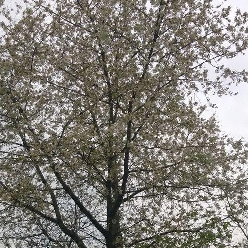 Doğa ana selam soyluyor... NİSAN Bahar Manzara gokyuzu agac istanbul sariyer
