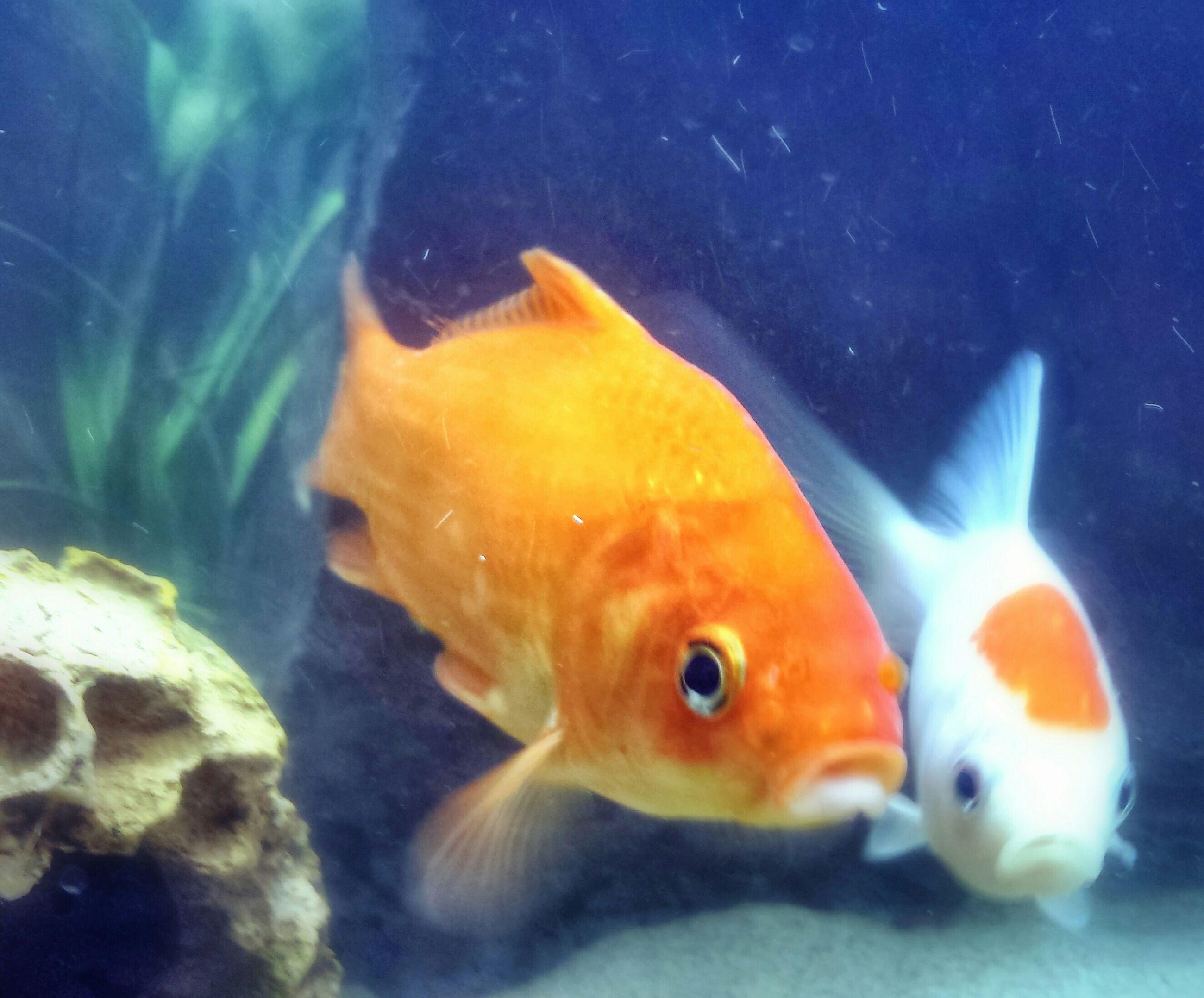 animal themes, underwater, fish, swimming, sea life, animals in the wild, wildlife, water, undersea, one animal, aquarium, close-up, indoors, sea, fish tank, animals in captivity, nature, transparent, coral, aquatic