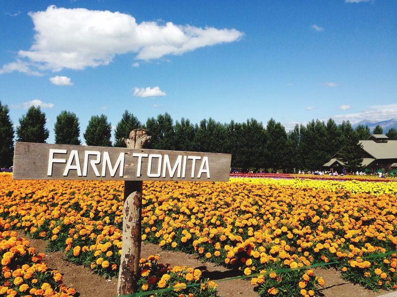 Furano Farm Tomita Hokkaido Travel Japan