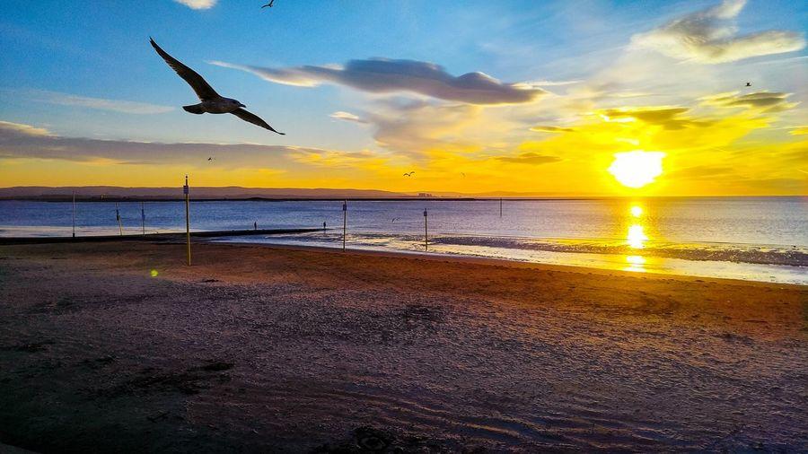 Sunset Beach First Eyeem Photo Cloud - Sky Beauty In Nature Bird Sun Sky Sea Clear Sky Burnham On Sea Landscape My First Eyem Photo EyeEmNewHere