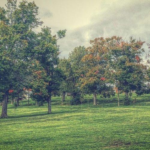 Greyskies Fall Autumnbeauty TreePorn whitecatphotography