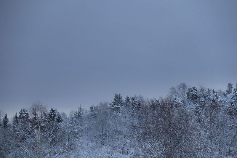 Trees on snow covered land against clear sky