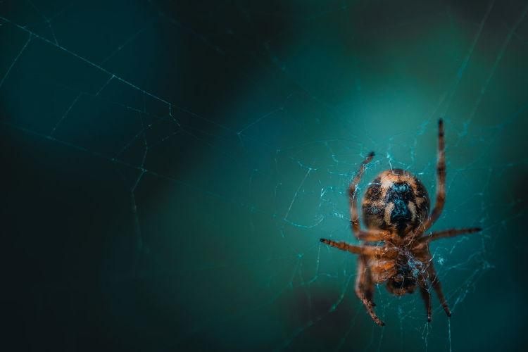 One Animal Animal Themes Arachnid Spider Spider Web Invertebrate Arthropod Animal Insect Animal Wildlife Animals In The Wild Fragility Close-up Vulnerability  Zoology Animal Leg Day Nature Animal Body Part No People