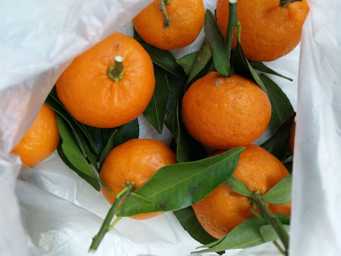 High angle view of orange fruits