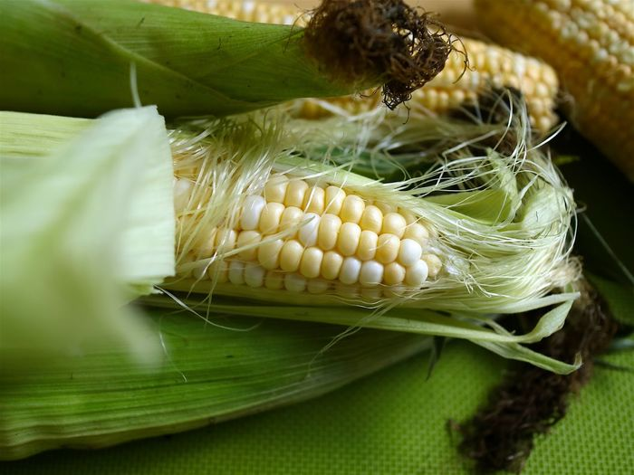 End of summer two colours sweet corn Corn Hair Corn On The Cob Eating Fresh End Of Summer Products Enjoying Life Green Color Harvest Time Leaves Raw Ready To Cook Sweet Corn Two Colors Yellow
