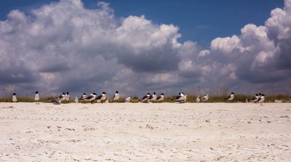 Seagulls Outdoors No People Sea Birds Nature Focused Sitting On A Beach Lifestyles Sky And Clouds Dramatic Sky