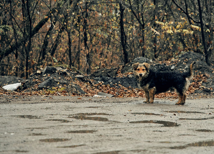 Dog running in a forest