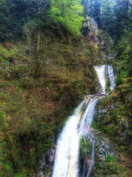 Hiking Photography Outdoors Forest Outdoor Photography Forest Photography Deutscher Wald Black Forest Schwarzwald Waterfall Great View Germany Taking Photos Eyemphotos Nature