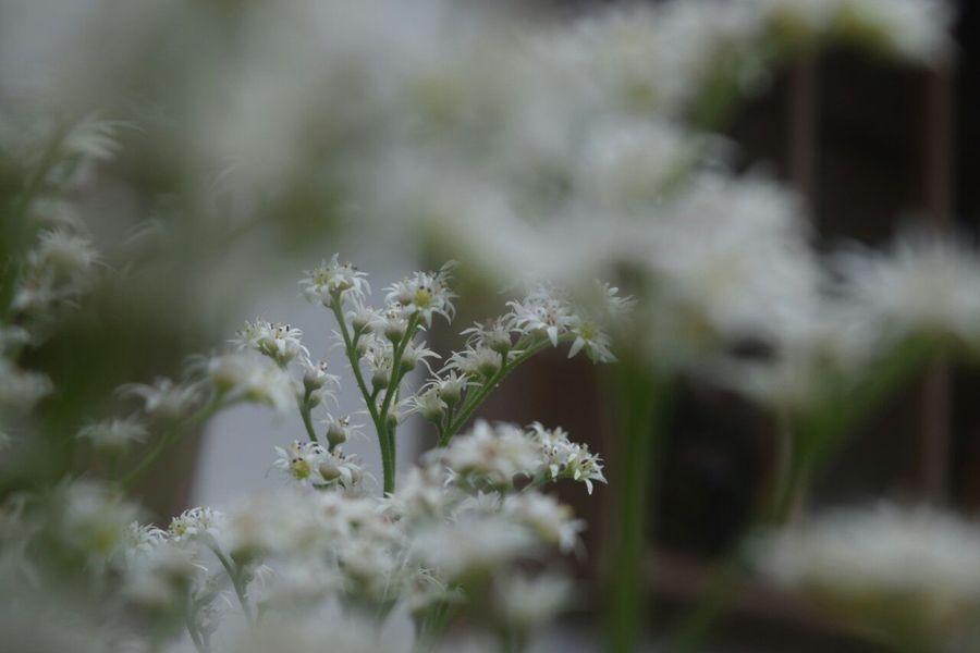 白いトンネル。 Relaxing Enjoying Life Flower Nature Japan ゆきやなぎ EyeEm Best Shots - Nature EyeEm Nature Lover EyeEm Flower