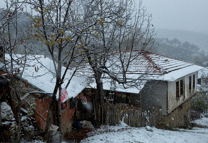 Snowy Village Life Architecture Bare Tree Building Exterior Built Structure Cold Temperature Homes Nature Nature Outdoors Rooftops Snow Covered Landscape Snow Rooftop Snowing Snowy Sünnet Sünnetköy Turkey View Village Life Winter