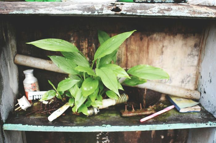 No People Plant Freshness Day Nature Still Life Eyeem Market Adapted To The City Kerala