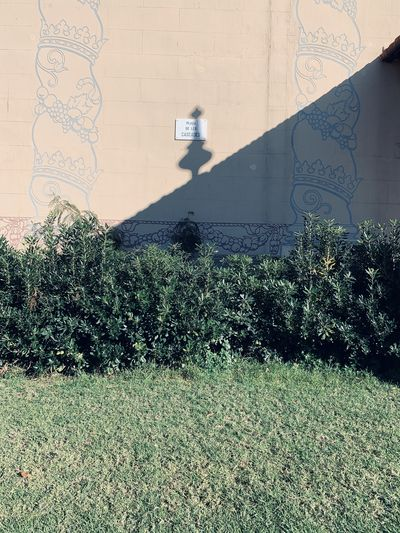 Shadow of tree on wall by building