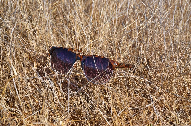 Fashionable Sunglasses Sunglasses In Natural Color Setting Fashion Photography Nature And Design No People Tortoise Shell Sunglasses In Dry Grass Clubmaster Sunglasses On Display