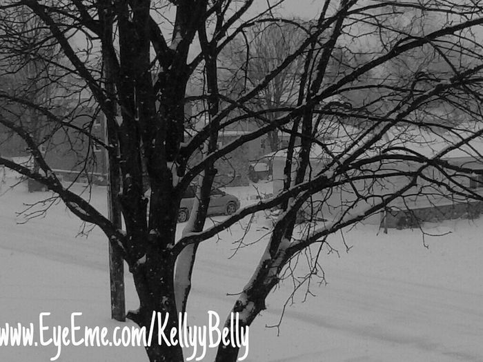 #Trees #Snow #House #Photography