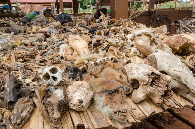 Close-up of dead animals and animal parts at traditional voodoo fetish market in benin, africa