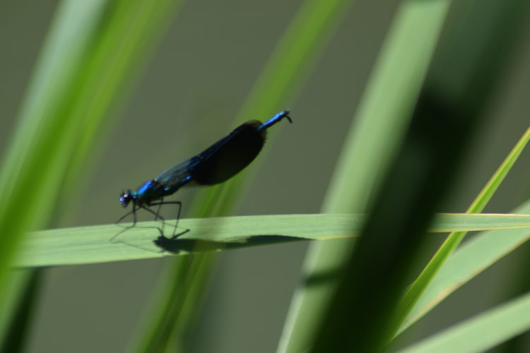 Close-up of insect on grass