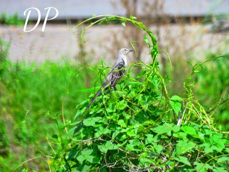 Green Color Animal Themes Plant Animals In The Wild One Animal Nature Growth Outdoors Grass No People Day Focus On Foreground Animal Wildlife Perching Close-up Bird Beauty In Nature