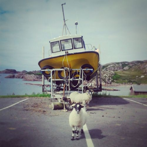 Schotland. Isle of Mull. Ilse Of Mull Schotland