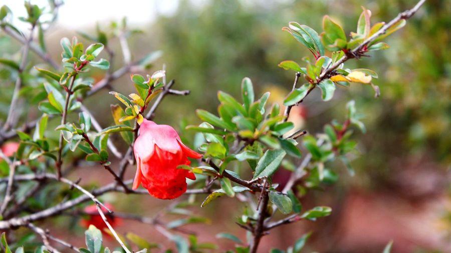 No Filter Flowers No Macro Lens