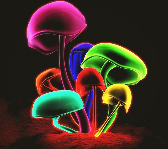 Its a colourfull trip baby, The neon psychadellia flows through the very life veins of the Earth, bringing visions and waking dreams to the explorer Colorful Mushroomsof ones own mind. Psychedelic Shrooms Experience Digital Art Eyeem Psychadelic State Of Mind  Trippy! Magic Mushrooms Sick Mind