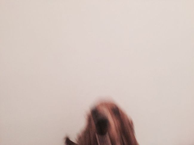 White Background Dog Blurry Movement Weird Minimal