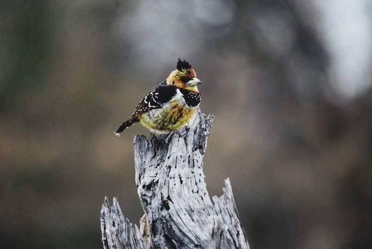 Bird on a stump