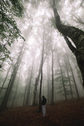 Adult Autumn Beauty In Nature Branch Day Fog Forest Full Length Leaf Nature One Person Outdoors People Real People Rear View Sky Standing Tree Tree Trunk Young Adult