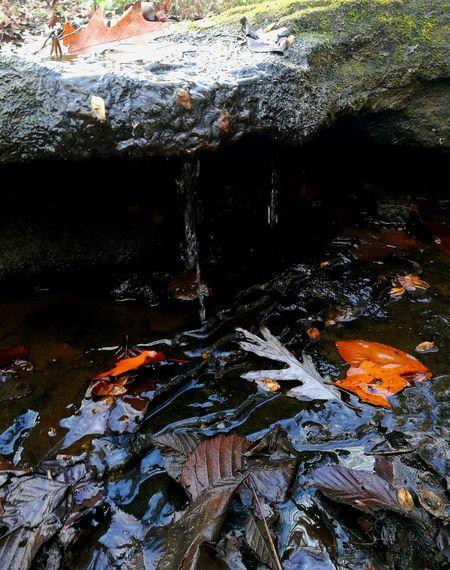 Water Micro Close-up Nature Outdoors Vivid Wet