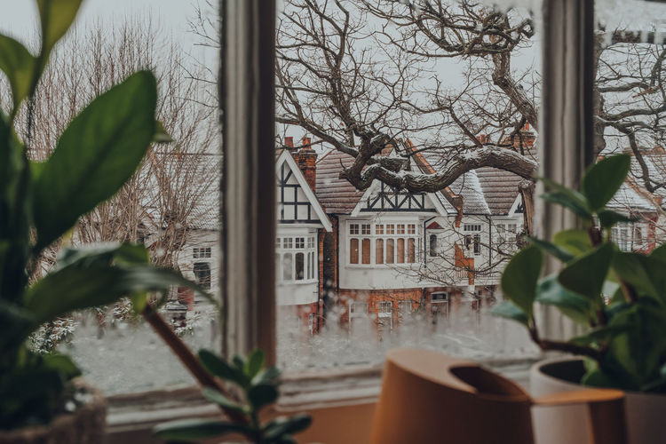 Potted plants by window of building