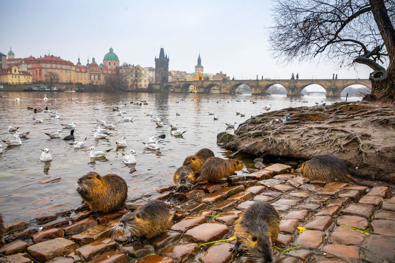 View of birds in river