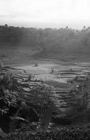 Bali's iconic rice paddies at the foot of Bali's most active volcano right now. Photographed on 3 Oct 2017 shortly after eruption warnings and evacuations were put into place. Agriculture Beauty In Nature Black And White Day Field High Angle View Landscape Monochrome Nature No People Outdoors Rural Scene Scenics Sky Terraced Field Tranquil Scene Tranquility Tree Bali INDONESIA