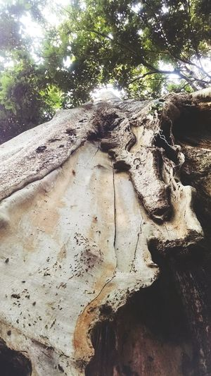 Tree of life Jambi Candimuarojambi