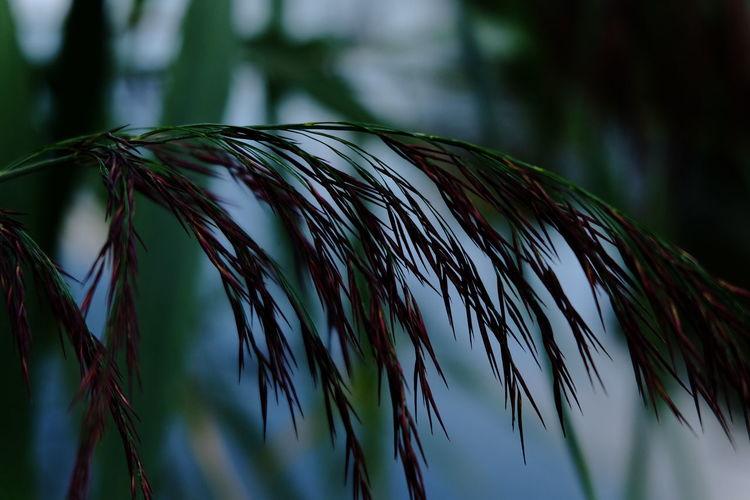 Fujifilm X-M1 mit Fujinon Lens xc16-50mm f 3.5... Mut dem Display meiner Kamera gesehen.. Noedit Jacqueline Schreiber No People Hildesheim Outdoor Photography Beauty In Nature Fujinon16-50mm Bokeh Fujifilm Fujifilm_xseries Fujifilm X-m1 Fujifilm_global Tree Water Palm Tree Sky Close-up Green Color