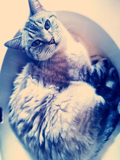 25 Days Of Summer Cute Cats Sleeping Sleeping In A Sink