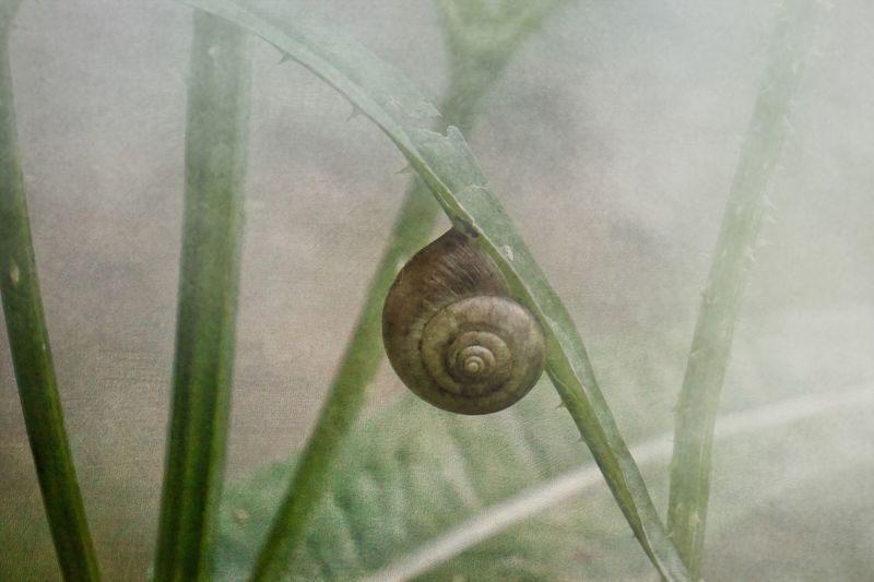 One Animal Snail Animal Themes Close-up Leaf No People Animals In The Wild Nature Green Color Outdoors Gastropod Fragility Day Nature Nature_collection Flower Plant Minimalism Bokeh Beauty In Nature Winter Still Life Light And Shadow Fog Scenics