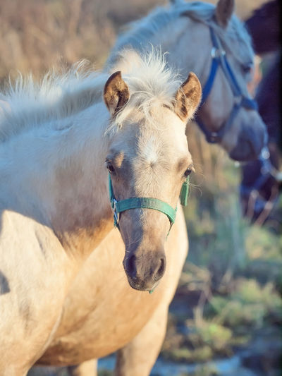 Close-up portrait of horse standing outdoors