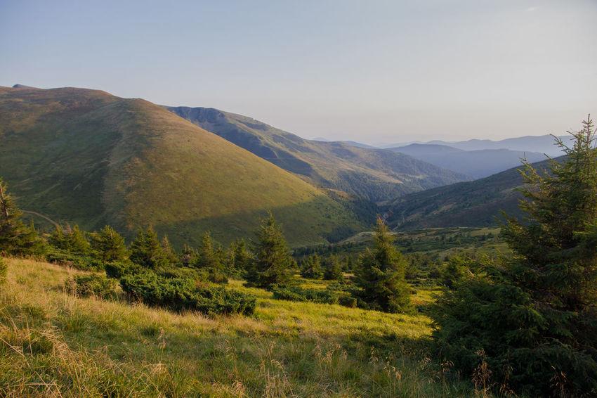 Dragobrat Dragobrat,Ukraine Beauty In Nature Day Landscape Mountain Mountain Range Nature No People Outdoors Sky Tree