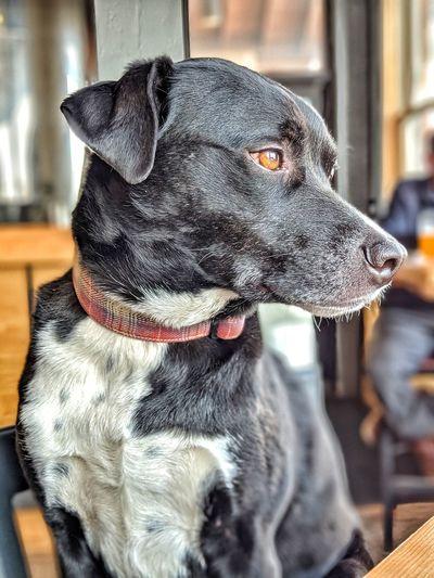 Pets Dog
