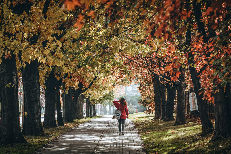 Rear view of woman walking amidst trees during autumn