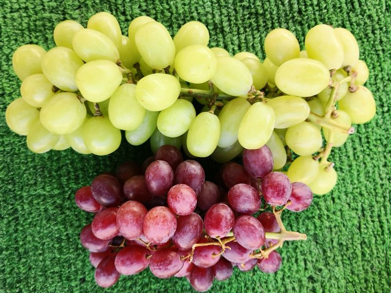 Blue and green grapes for sale Red Grapes Green Grapes Flower Fruit Flower Head Directly Above Close-up Grass Green Color Food And Drink Red Grape Grape Bunch Ripe Winemaking Vine - Plant Unripe Vineyard Juicy Cultivated Vine Bundle