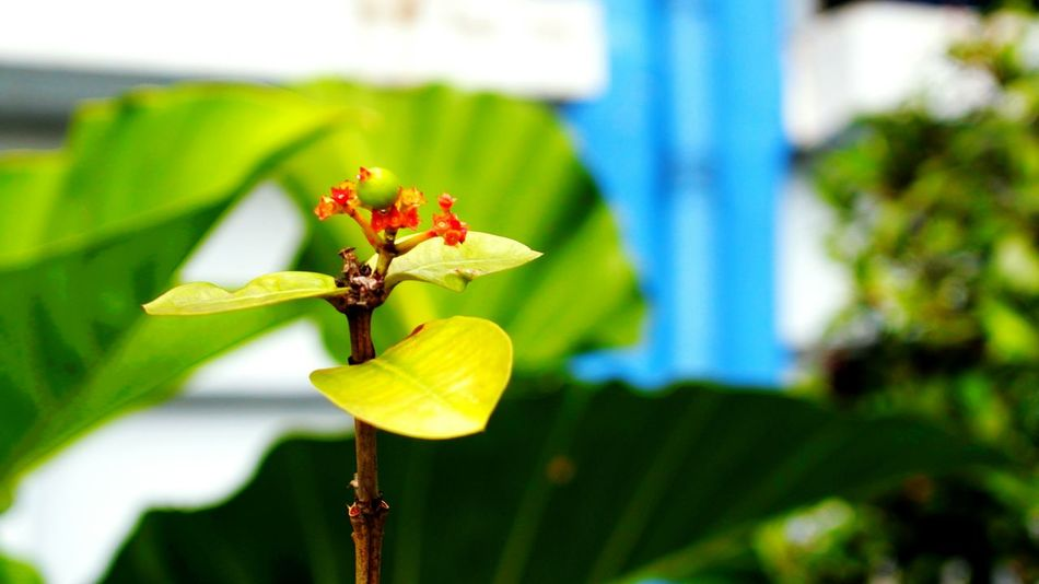 Wood EyeEm Selects Beauty In Nature Bokeh Photography No People In Jakarta Macro Photography In Jakarta, Indonesia No People, Using Mirorles EyeEmNewHere Flower Bee Leaf Insect Flower Head Butterfly - Insect Pollination Animal Themes Close-up Plant