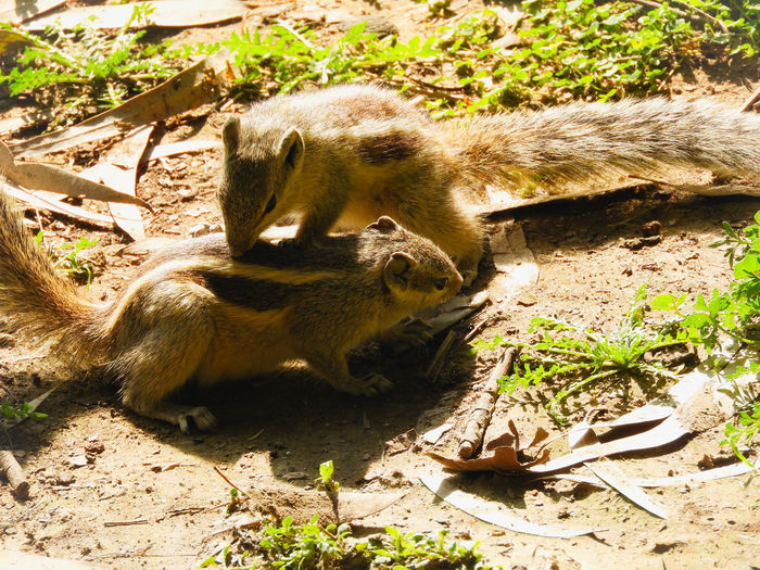 Animal Animal Themes Animals In The Wild Two Animals Two Togetherness Outdoors Sunlight Playful Playing Animals Shadow Sunlight Grass Squirrel Rodent Wildlife