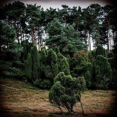 Wald Halternamsee Haltern Baum Heide Westruperheide Picoftheday Bestoftheday NRW Olympus Germany