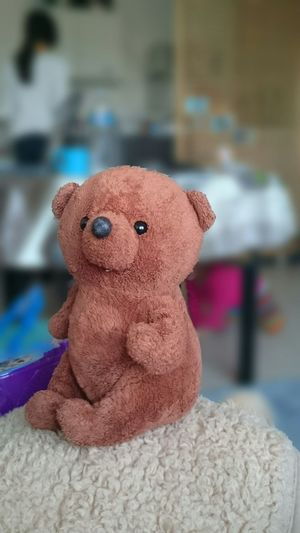 Kuma Ours Ours Brun Petit Ours Brun Bear Wildlife Softtoys Softtoy Puppy Love Puppy❤