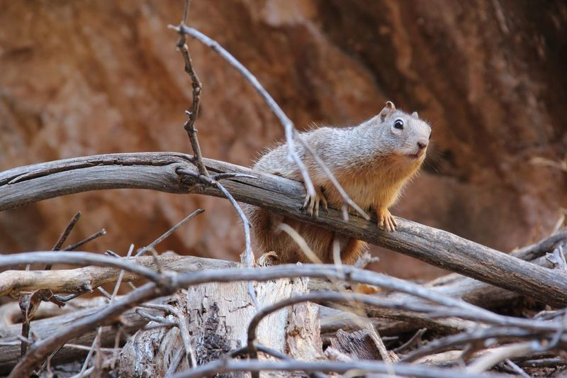 Close up of squirrel on tree trunk
