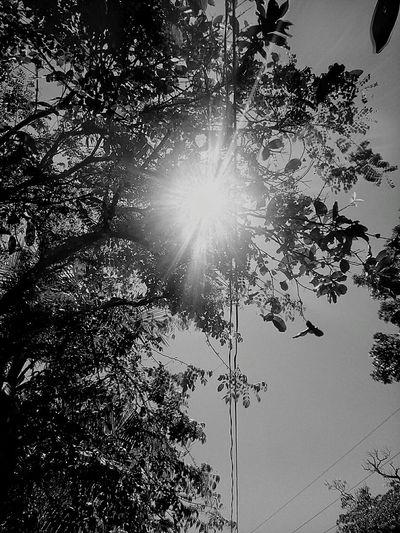 Taking Photos Blackandwhite Photography Blackandwhite Light Summerheat Photography Photo Oroquieta City