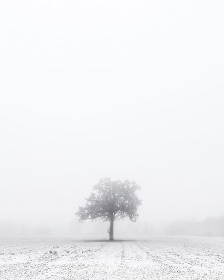Tree in snow covered field during winter